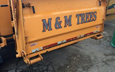 Small Business Showcase: M&M Trees LLC